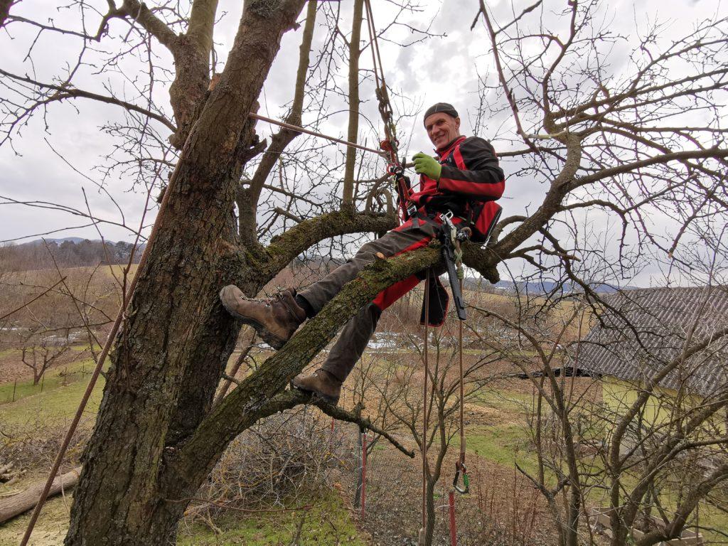 Arborista Peter Švidroň (OvoArb s.r.o.) - zmladzovací rez jablone
