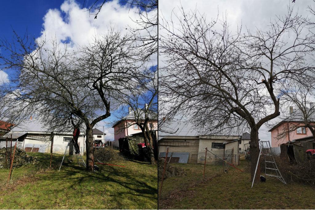Zmladzovací rez jabloní - pred a po oreze - Ovoarb, Peter Švidroň